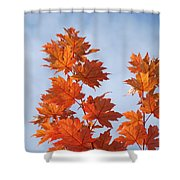 Autumn Tree Leaves Art Prints Blue Sky White Clouds Shower Curtain