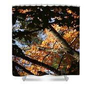 Autumn Trees 2015 Pa 01 Shower Curtain
