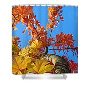Autumn Trees Artwork Fall Leaves Blue Sky Baslee Troutman Shower Curtain