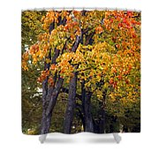 Autumn Trees In Park Shower Curtain