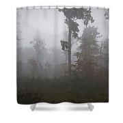 Autumn Trees In The Mist Shower Curtain