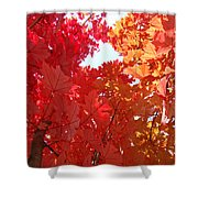 Autumn Trees Red Orange Fall Trees Art Baslee Troutman Shower Curtain