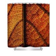 Autumn Veins Shower Curtain