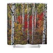 Autumn Warm Shower Curtain