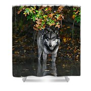 Autumn Wolf Shower Curtain