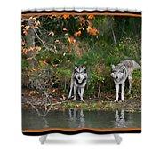 Autumn Wolf Study  Shower Curtain