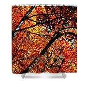 Autumn Wonder Shower Curtain