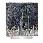 Autumn Woods Shower Curtain