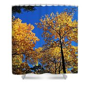 Autumn Yellow Foliage On Tall Trees Against A Blue Sky In Palermo Shower Curtain