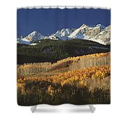 Autumnal View Of Aspen Trees And The Shower Curtain