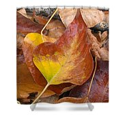 Autumns Color Palette Shower Curtain