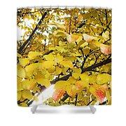 Autumns Gold Shower Curtain