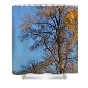 Autumn's Gold  - No 2 Shower Curtain