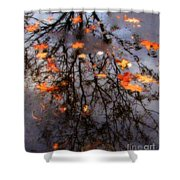 Autumns Looking Glass 3 Shower Curtain