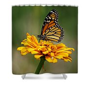 Autumn's Wings Shower Curtain