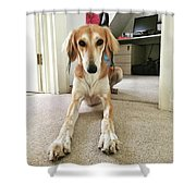 Ava On Her First Birthday #saluki Shower Curtain