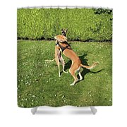 Ava The Saluki And Finly The Lurcher Shower Curtain