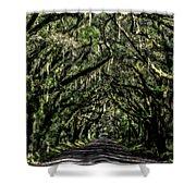 Avenue Of Oaks Shower Curtain