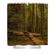 Avenue Of The Giants Shower Curtain