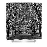 Avenue Of Trees Monochrome Shower Curtain