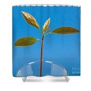 Avocado Seedling Shower Curtain