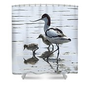 Avocet And Chicks Shower Curtain