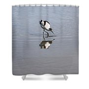 Avocet And Reflection Shower Curtain