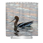 Avocet Sunset Shower Curtain