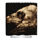Avvoltoio Shower Curtain