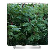 Awaiting The Sumac Shower Curtain