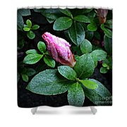 Awakening - Flower Bud In The Rain Shower Curtain