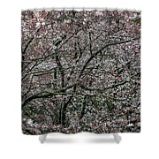 Awash In Cherry Blossoms Shower Curtain