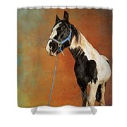 Awesome Gypsy Horse Shower Curtain