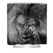 Awwwww..... #2 Black And White Shower Curtain