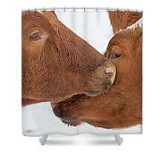 Ayrshire Affection Shower Curtain
