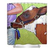 Ayrshire Show Heifer Shower Curtain