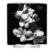 Azaela Blossom In Black And White Shower Curtain