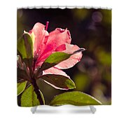 Azalea 2 Shower Curtain
