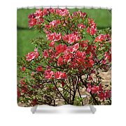 Azalea Bush 2  Shower Curtain
