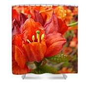 Azalea Flowers Art Prints Azaleas Gilcee Art Prints Baslee Troutman Shower Curtain
