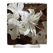 Azalea Flowers In Sepia Brown Shower Curtain