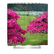 Azaleas At The Azores Shower Curtain