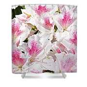 Azaleas Flowers Pink White Azalea Floral Baslee Troutman Shower Curtain