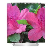 Azaleas II Shower Curtain