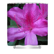 Azaleas IIi Shower Curtain