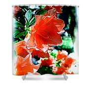 Azaleas In The Spring Shower Curtain