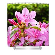 Azaleas Pink Azalea Flowers Artwork 12 Landscape Art Prints Shower Curtain
