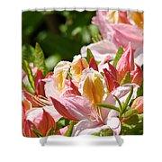 Azaleas Pink Orange Yellow Azalea Flowers 6 Summer Flowers Art Prints Baslee Troutman Shower Curtain
