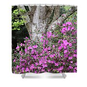 Azaleas With Tree Shower Curtain