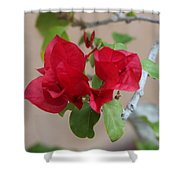 Aztec Bougainvillea  Shower Curtain